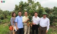 越南新鲜荔枝已经在日本上市