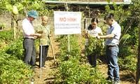 朝着可持续方向发展药材种植业