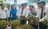  山萝省马江县  近30吨龙眼(Son La)正式出口到中国