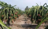 前江:水果王国准备7.5万吨水果服务春节市场