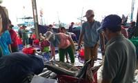 越南中南部地区渔民春节期间海上鱼获丰收