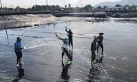 越南有望成为世界虾类产品主要生产国
