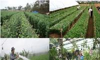 Provinsi Ninh Binh terus melakukan produksi menurut arah terfokus pada produk-produk unggulan