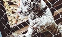 Coup de filet international sur un trafic tentaculaire d'animaux sauvages