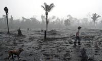 Sept pays d'Amérique du Sud signent un pacte pour défendre l'Amazonie