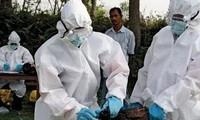 Sechster Tote durch Vogelgrippevirus H7N9