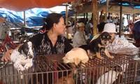 Hang-Markt – eine Besonderheit in Hai Phong