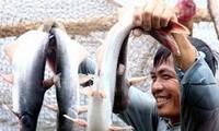"""Neugestaltung der """"Neuen Genossenschaften"""" im Mekong-Delta"""