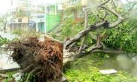Fünf Tote durch Taifun Nari