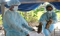 Abgeordnete diskutieren den Veterinärgesetzentwurf