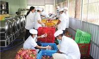 Frau Le Nguyen engagiert sich für Drachenfrucht
