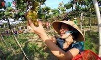 Ninh Thuan will mehr als zwei Millionen Touristen im Jahr 2019 empfangen