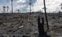 G7-Gruppe sagt 20 Millionen Euro schwere Soforthilfe für Amazones zu