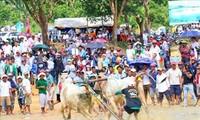Bewahrung des Bullenrennens in Bay Nui