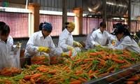 Die Landwirtschaftsbranche fördert Exportmärkte für landwirtschaftliche Produkte