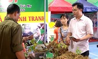 Markttag von Ginseng Ngoc Linh in der Provinz Quang Nam