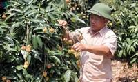 Vietnam und China: Bewältigung der Schwierigkeiten zum Verbrauch von Agrarprodukten