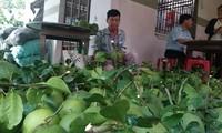 Bauern in Ben Tre wollen Aufbau und Vollendung der Wertkette der landwirtschaftlichen Produkte fördern