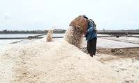 """""""Salzgewinnung in Bac Lieu"""" wird als immaterielles nationales Kulturerbe Vietnams anerkannt"""