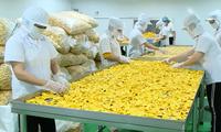 Mekong-Delta fördert den Aufbau von OCOP-Marken