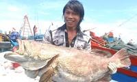 Aufbau der maritimen Wirtschaft in Vietnam