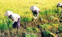 Fast 1200 Delegierte nehmen an Landeskonferenz des Bauernverbands teil