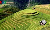 Kultur des Terrassenfeldbaus in nordvietnamesischen Gebirgsregionen