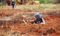 Vietnam beseitigt Blindgänger