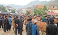 Rinderzucht in Ha Giang