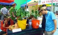 Eröffnung des 1. Markttags für Ngoc Linh-Ginseng in Quang Nam