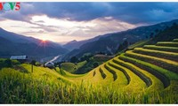 Schöne Reisterrassen in Mu Cang Chai zur Erntezeit