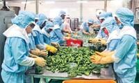 Export von Land- und Forstwirtschafts- sowie Aquakulturprodukten erreicht über 33 Milliarden US-Dollar