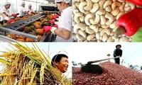 Vietnamesische Bauern beteiligen sich am globalen Spielplatz