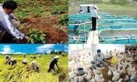 Die vietnamesische Landwirtschaft bewältigt Schwierigkeiten, um sich weiterzuentwickeln