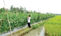 Die Landwirtschaft teilt Gebiete, um sich besser an den Klimawandel anzupassen