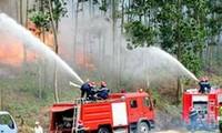 Memperkenalkan pekerjaan mencegah dan memadamkan kebakaran hutan di Vietnam