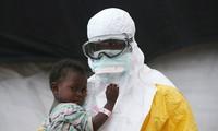 Virus Ebola muncul kembali