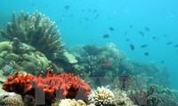 60 negara berkomitmen melindungi lingkungan hidup