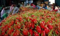 Pasar ekspor hasil pertanian tahun 2016 bersemarak