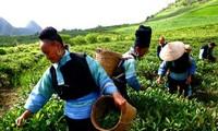 Hasil-guna dari kebijakan membantu pengembangan sosial-ekonomi di daerah pegunungan