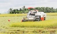 Melakukan restrukturisasi pertanian untuk beradaptasi dengan perubahan iklim