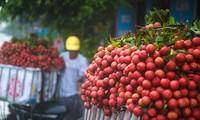 Vietnam Airlines memasukkan buah leci dalam misi-misi penerbangan domestik dan internasional