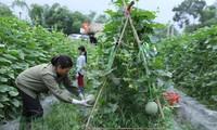 Menyediakan kira-kira 2 miliar USD dari modal ODA untuk pertanian selama 20 tahun ini