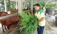 Bapak Huynh Van Det – seorang petani tipikal di Provinsi Ben Tre