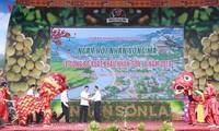 Mengumumkan ekspor kelengkeng Provinsi Son La