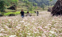 """Acara Pembukaan Festival Bunga Gandum Kuda  """"Warna Merah Muda di Daerah Dataran Tinggi Batu"""""""