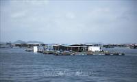 Asosiasi Budidaya Hasil Laut Vietnam: Menghimpun Kekuatan Multicabang  untuk Mengembangkan Ekonomi Laut