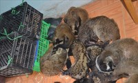 Vietnam leads effort to end wildlife trafficking in Southeast Asia