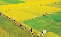 Ханам активно реорганизует земельные участки и ликвидирует мелкое производство