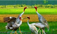 Обнародован национальный доклад о биологическом разнообразии